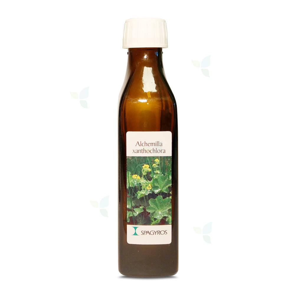 Alchemilla xanthochlora - Frauenmantel - 50ml